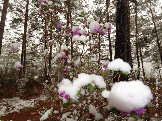 Это Иоанн Кронштадтский, святой праведник, сказал, что цветы – остатки рая на земле. И разве нельзя назвать райским местом этот родник в Бешпельтирском логу? У нас, в Горном Алтае, такая красота повсюду. И я приглашаю вас на неспешную прогулку по цветущему Алтаю. фото 34