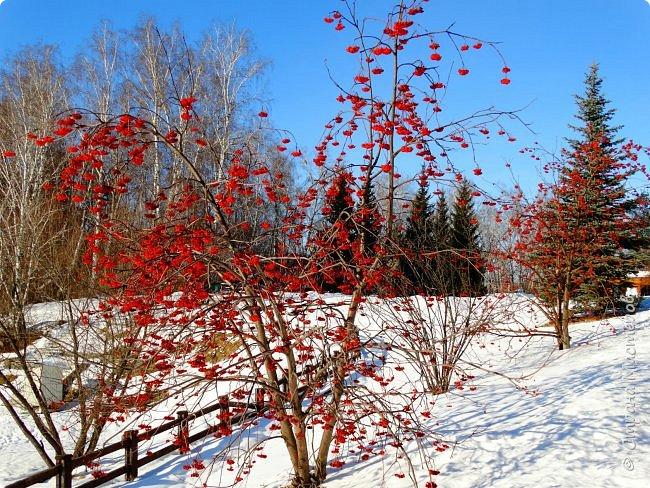 Это Иоанн Кронштадтский, святой праведник, сказал, что цветы – остатки рая на земле. И разве нельзя назвать райским местом этот родник в Бешпельтирском логу? У нас, в Горном Алтае, такая красота повсюду. И я приглашаю вас на неспешную прогулку по цветущему Алтаю. фото 11