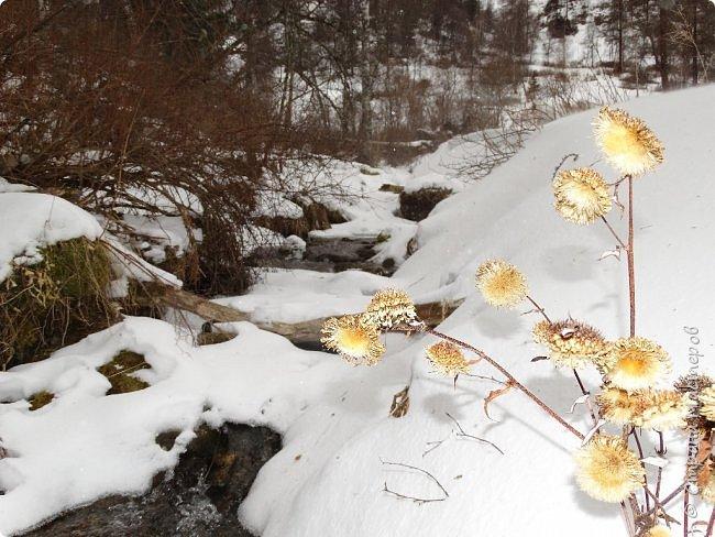 Это Иоанн Кронштадтский, святой праведник, сказал, что цветы – остатки рая на земле. И разве нельзя назвать райским местом этот родник в Бешпельтирском логу? У нас, в Горном Алтае, такая красота повсюду. И я приглашаю вас на неспешную прогулку по цветущему Алтаю. фото 12