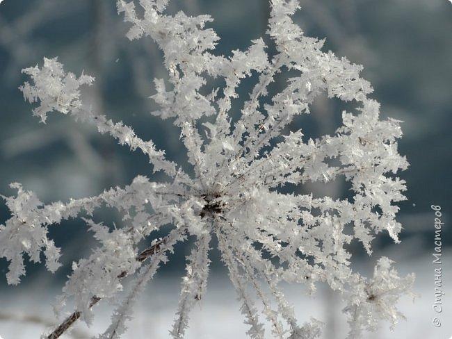 Это Иоанн Кронштадтский, святой праведник, сказал, что цветы – остатки рая на земле. И разве нельзя назвать райским местом этот родник в Бешпельтирском логу? У нас, в Горном Алтае, такая красота повсюду. И я приглашаю вас на неспешную прогулку по цветущему Алтаю. фото 13