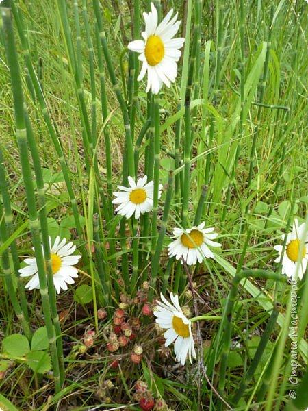 Это Иоанн Кронштадтский, святой праведник, сказал, что цветы – остатки рая на земле. И разве нельзя назвать райским местом этот родник в Бешпельтирском логу? У нас, в Горном Алтае, такая красота повсюду. И я приглашаю вас на неспешную прогулку по цветущему Алтаю. фото 97