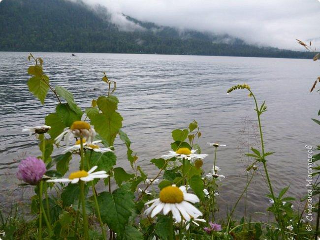 Это Иоанн Кронштадтский, святой праведник, сказал, что цветы – остатки рая на земле. И разве нельзя назвать райским местом этот родник в Бешпельтирском логу? У нас, в Горном Алтае, такая красота повсюду. И я приглашаю вас на неспешную прогулку по цветущему Алтаю. фото 96