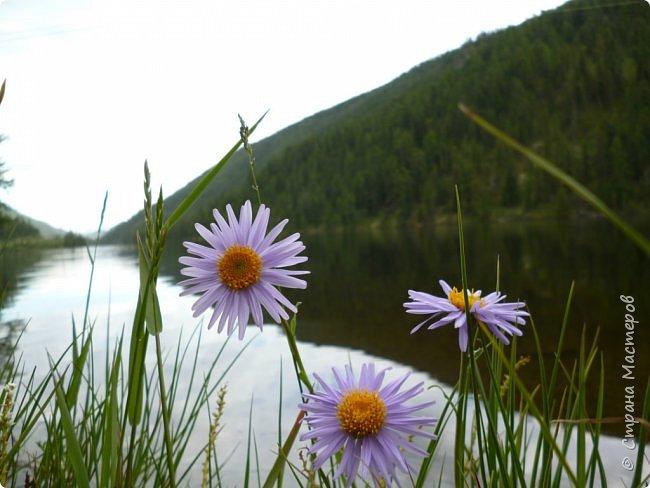 Это Иоанн Кронштадтский, святой праведник, сказал, что цветы – остатки рая на земле. И разве нельзя назвать райским местом этот родник в Бешпельтирском логу? У нас, в Горном Алтае, такая красота повсюду. И я приглашаю вас на неспешную прогулку по цветущему Алтаю. фото 93