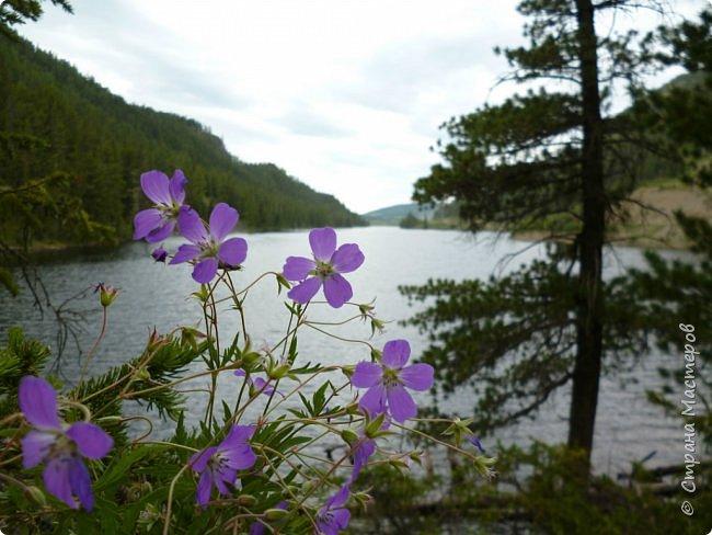Это Иоанн Кронштадтский, святой праведник, сказал, что цветы – остатки рая на земле. И разве нельзя назвать райским местом этот родник в Бешпельтирском логу? У нас, в Горном Алтае, такая красота повсюду. И я приглашаю вас на неспешную прогулку по цветущему Алтаю. фото 95