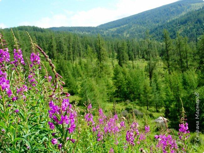 Это Иоанн Кронштадтский, святой праведник, сказал, что цветы – остатки рая на земле. И разве нельзя назвать райским местом этот родник в Бешпельтирском логу? У нас, в Горном Алтае, такая красота повсюду. И я приглашаю вас на неспешную прогулку по цветущему Алтаю. фото 66