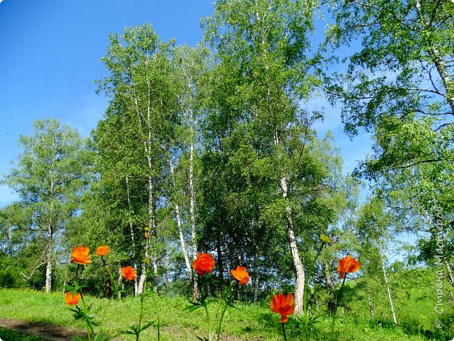 Это Иоанн Кронштадтский, святой праведник, сказал, что цветы – остатки рая на земле. И разве нельзя назвать райским местом этот родник в Бешпельтирском логу? У нас, в Горном Алтае, такая красота повсюду. И я приглашаю вас на неспешную прогулку по цветущему Алтаю. фото 54