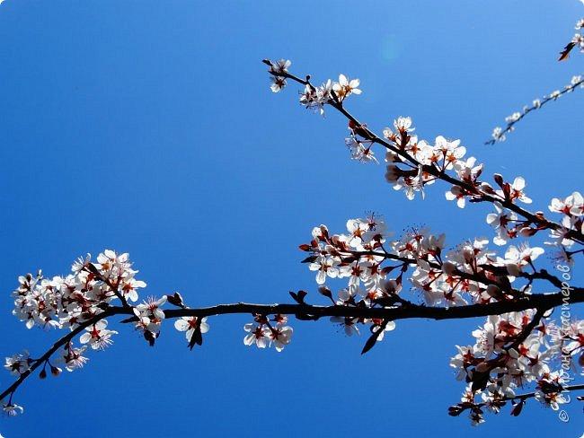 Это Иоанн Кронштадтский, святой праведник, сказал, что цветы – остатки рая на земле. И разве нельзя назвать райским местом этот родник в Бешпельтирском логу? У нас, в Горном Алтае, такая красота повсюду. И я приглашаю вас на неспешную прогулку по цветущему Алтаю. фото 47