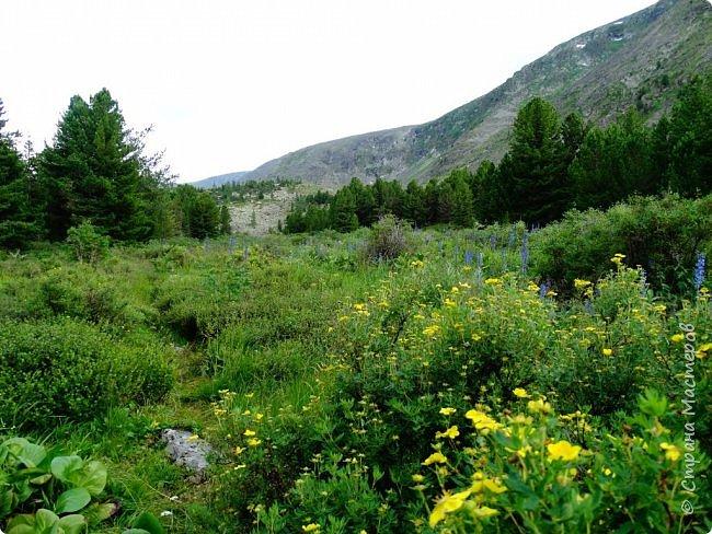Это Иоанн Кронштадтский, святой праведник, сказал, что цветы – остатки рая на земле. И разве нельзя назвать райским местом этот родник в Бешпельтирском логу? У нас, в Горном Алтае, такая красота повсюду. И я приглашаю вас на неспешную прогулку по цветущему Алтаю. фото 68