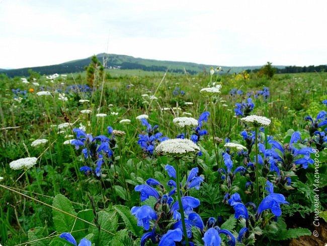Это Иоанн Кронштадтский, святой праведник, сказал, что цветы – остатки рая на земле. И разве нельзя назвать райским местом этот родник в Бешпельтирском логу? У нас, в Горном Алтае, такая красота повсюду. И я приглашаю вас на неспешную прогулку по цветущему Алтаю. фото 62