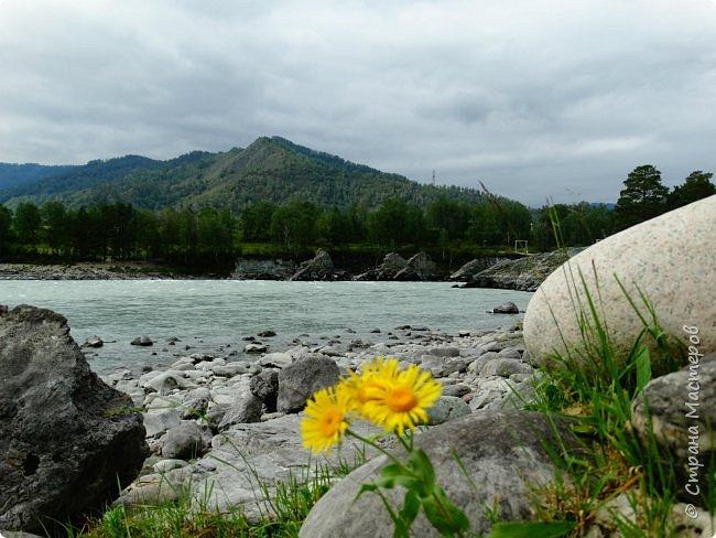 Это Иоанн Кронштадтский, святой праведник, сказал, что цветы – остатки рая на земле. И разве нельзя назвать райским местом этот родник в Бешпельтирском логу? У нас, в Горном Алтае, такая красота повсюду. И я приглашаю вас на неспешную прогулку по цветущему Алтаю. фото 83