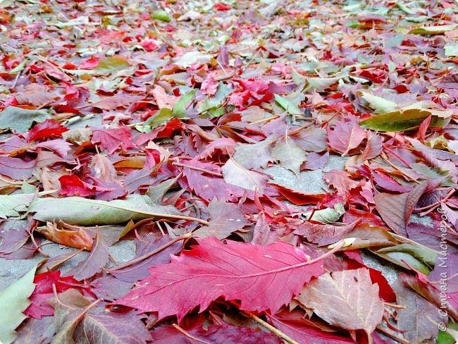 Это Иоанн Кронштадтский, святой праведник, сказал, что цветы – остатки рая на земле. И разве нельзя назвать райским местом этот родник в Бешпельтирском логу? У нас, в Горном Алтае, такая красота повсюду. И я приглашаю вас на неспешную прогулку по цветущему Алтаю. фото 10