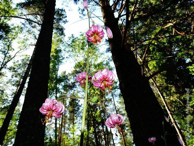 Это Иоанн Кронштадтский, святой праведник, сказал, что цветы – остатки рая на земле. И разве нельзя назвать райским местом этот родник в Бешпельтирском логу? У нас, в Горном Алтае, такая красота повсюду. И я приглашаю вас на неспешную прогулку по цветущему Алтаю. фото 91