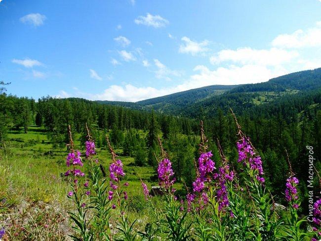 Это Иоанн Кронштадтский, святой праведник, сказал, что цветы – остатки рая на земле. И разве нельзя назвать райским местом этот родник в Бешпельтирском логу? У нас, в Горном Алтае, такая красота повсюду. И я приглашаю вас на неспешную прогулку по цветущему Алтаю. фото 64