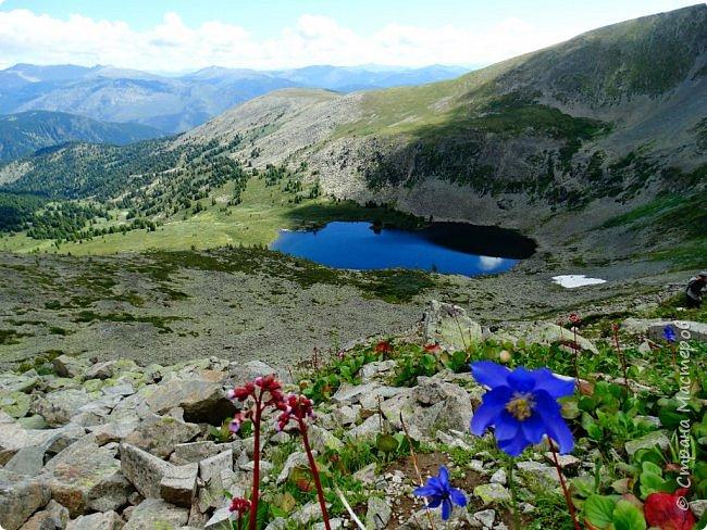 Это Иоанн Кронштадтский, святой праведник, сказал, что цветы – остатки рая на земле. И разве нельзя назвать райским местом этот родник в Бешпельтирском логу? У нас, в Горном Алтае, такая красота повсюду. И я приглашаю вас на неспешную прогулку по цветущему Алтаю. фото 76