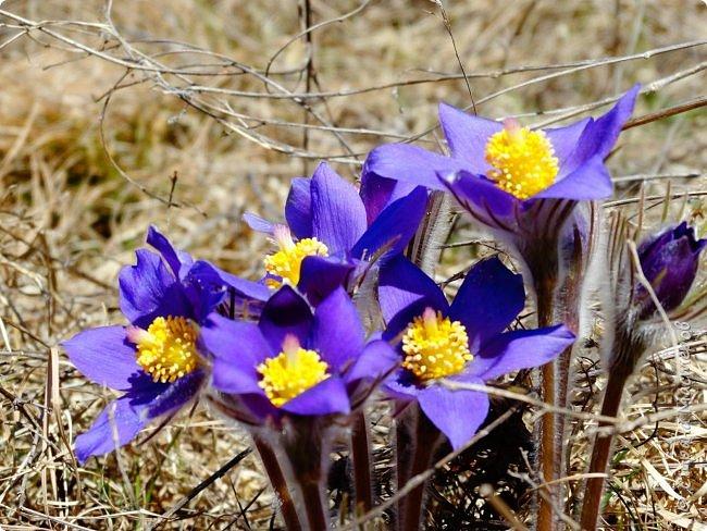 Это Иоанн Кронштадтский, святой праведник, сказал, что цветы – остатки рая на земле. И разве нельзя назвать райским местом этот родник в Бешпельтирском логу? У нас, в Горном Алтае, такая красота повсюду. И я приглашаю вас на неспешную прогулку по цветущему Алтаю. фото 20