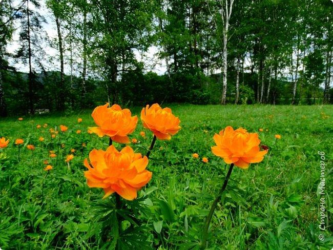 Это Иоанн Кронштадтский, святой праведник, сказал, что цветы – остатки рая на земле. И разве нельзя назвать райским местом этот родник в Бешпельтирском логу? У нас, в Горном Алтае, такая красота повсюду. И я приглашаю вас на неспешную прогулку по цветущему Алтаю. фото 57
