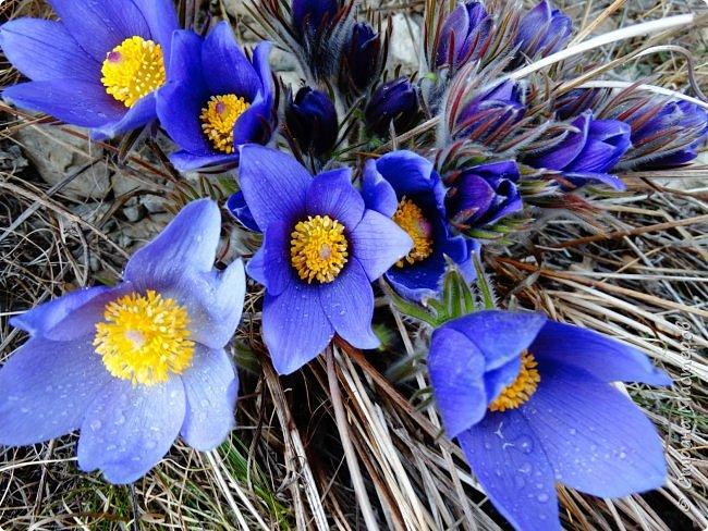 Это Иоанн Кронштадтский, святой праведник, сказал, что цветы – остатки рая на земле. И разве нельзя назвать райским местом этот родник в Бешпельтирском логу? У нас, в Горном Алтае, такая красота повсюду. И я приглашаю вас на неспешную прогулку по цветущему Алтаю. фото 21