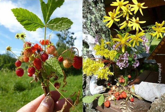 Это Иоанн Кронштадтский, святой праведник, сказал, что цветы – остатки рая на земле. И разве нельзя назвать райским местом этот родник в Бешпельтирском логу? У нас, в Горном Алтае, такая красота повсюду. И я приглашаю вас на неспешную прогулку по цветущему Алтаю. фото 90