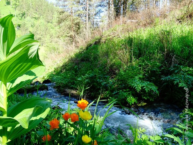 Это Иоанн Кронштадтский, святой праведник, сказал, что цветы – остатки рая на земле. И разве нельзя назвать райским местом этот родник в Бешпельтирском логу? У нас, в Горном Алтае, такая красота повсюду. И я приглашаю вас на неспешную прогулку по цветущему Алтаю. фото 1