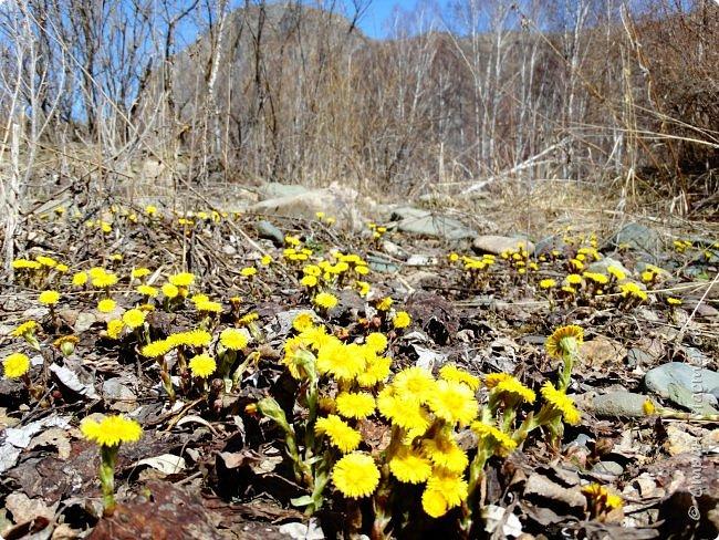 Это Иоанн Кронштадтский, святой праведник, сказал, что цветы – остатки рая на земле. И разве нельзя назвать райским местом этот родник в Бешпельтирском логу? У нас, в Горном Алтае, такая красота повсюду. И я приглашаю вас на неспешную прогулку по цветущему Алтаю. фото 29