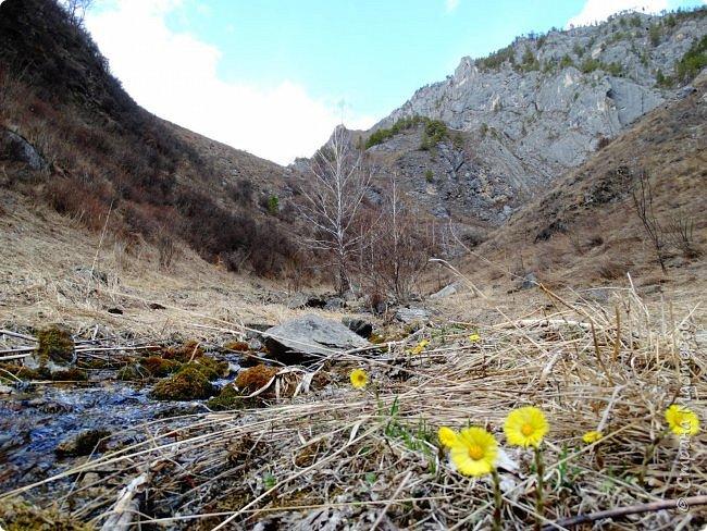 Это Иоанн Кронштадтский, святой праведник, сказал, что цветы – остатки рая на земле. И разве нельзя назвать райским местом этот родник в Бешпельтирском логу? У нас, в Горном Алтае, такая красота повсюду. И я приглашаю вас на неспешную прогулку по цветущему Алтаю. фото 28