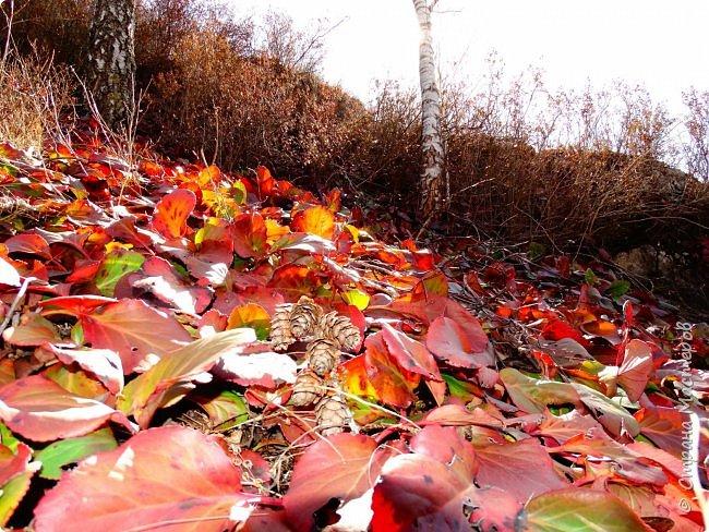 Это Иоанн Кронштадтский, святой праведник, сказал, что цветы – остатки рая на земле. И разве нельзя назвать райским местом этот родник в Бешпельтирском логу? У нас, в Горном Алтае, такая красота повсюду. И я приглашаю вас на неспешную прогулку по цветущему Алтаю. фото 44