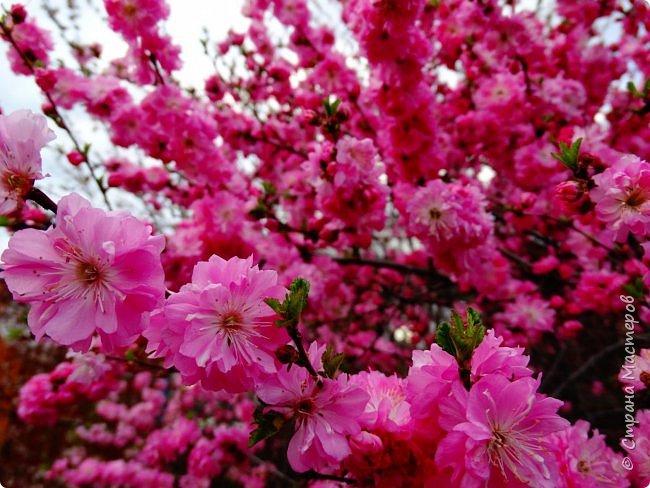 Это Иоанн Кронштадтский, святой праведник, сказал, что цветы – остатки рая на земле. И разве нельзя назвать райским местом этот родник в Бешпельтирском логу? У нас, в Горном Алтае, такая красота повсюду. И я приглашаю вас на неспешную прогулку по цветущему Алтаю. фото 46