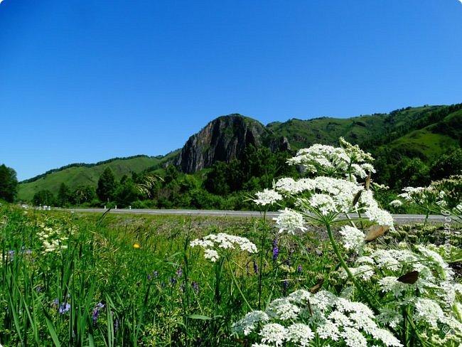Это Иоанн Кронштадтский, святой праведник, сказал, что цветы – остатки рая на земле. И разве нельзя назвать райским местом этот родник в Бешпельтирском логу? У нас, в Горном Алтае, такая красота повсюду. И я приглашаю вас на неспешную прогулку по цветущему Алтаю. фото 72