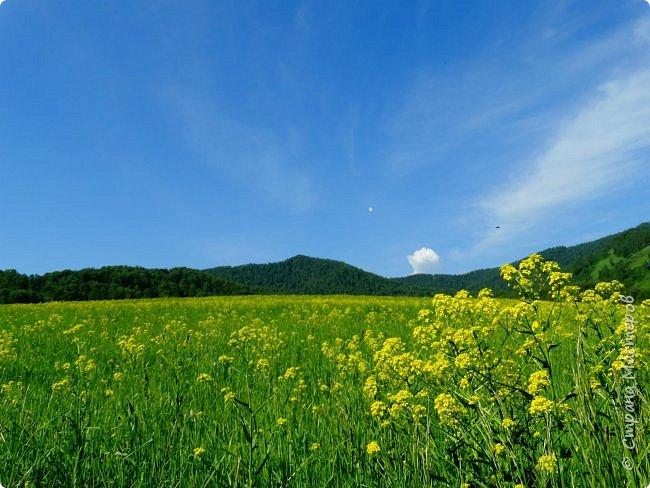 Это Иоанн Кронштадтский, святой праведник, сказал, что цветы – остатки рая на земле. И разве нельзя назвать райским местом этот родник в Бешпельтирском логу? У нас, в Горном Алтае, такая красота повсюду. И я приглашаю вас на неспешную прогулку по цветущему Алтаю. фото 59