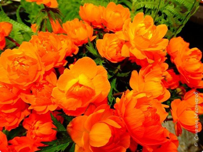 Это Иоанн Кронштадтский, святой праведник, сказал, что цветы – остатки рая на земле. И разве нельзя назвать райским местом этот родник в Бешпельтирском логу? У нас, в Горном Алтае, такая красота повсюду. И я приглашаю вас на неспешную прогулку по цветущему Алтаю. фото 56