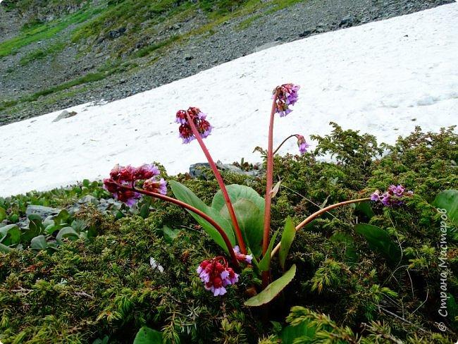 Это Иоанн Кронштадтский, святой праведник, сказал, что цветы – остатки рая на земле. И разве нельзя назвать райским местом этот родник в Бешпельтирском логу? У нас, в Горном Алтае, такая красота повсюду. И я приглашаю вас на неспешную прогулку по цветущему Алтаю. фото 77