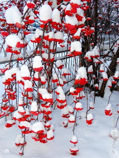 Это Иоанн Кронштадтский, святой праведник, сказал, что цветы – остатки рая на земле. И разве нельзя назвать райским местом этот родник в Бешпельтирском логу? У нас, в Горном Алтае, такая красота повсюду. И я приглашаю вас на неспешную прогулку по цветущему Алтаю. фото 15