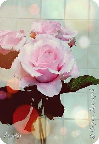 Здравствуйте!  Наткнулась я недавно в СМ на красивейшие розы, выполненные мастерицей Натальей  http://stranamasterov.ru/user/78045  по МК Александры Троицкой. И так мне захотелось попробовать сделать такие же. Два праздничных майских дня было потрачено на изучение и изготовление. Получилось пока три розочки. фото 11