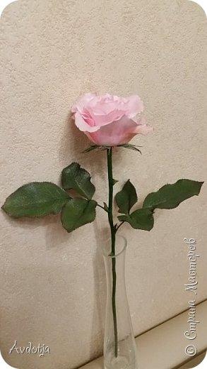 Здравствуйте!  Наткнулась я недавно в СМ на красивейшие розы, выполненные мастерицей Натальей  http://stranamasterov.ru/user/78045  по МК Александры Троицкой. И так мне захотелось попробовать сделать такие же. Два праздничных майских дня было потрачено на изучение и изготовление. Получилось пока три розочки. фото 4