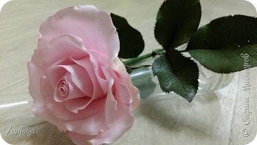 Здравствуйте!  Наткнулась я недавно в СМ на красивейшие розы, выполненные мастерицей Натальей  http://stranamasterov.ru/user/78045  по МК Александры Троицкой. И так мне захотелось попробовать сделать такие же. Два праздничных майских дня было потрачено на изучение и изготовление. Получилось пока три розочки. фото 2