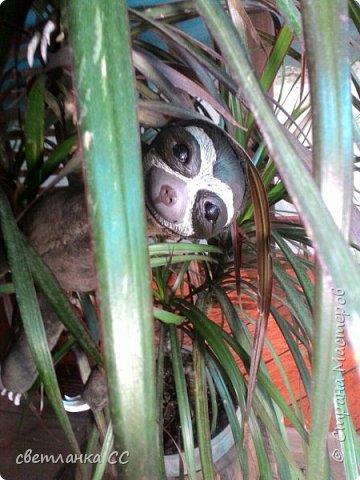 По МК Ниа Котоми с небольшими изменениями в выкройке,родился у меня ленивец Лорри фото 1