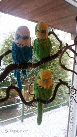 Вязаные волнистые попугайчики фото 4