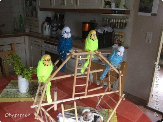 Вязаные волнистые попугайчики фото 1