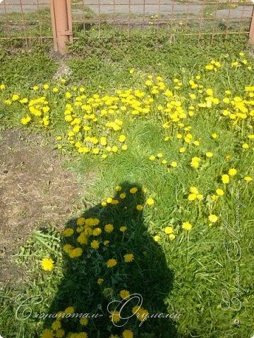 Привет, сограждане! Очередной прямой фоторепортаж о моих кактусятах (любимых кактусятах -:)). Отчёт за 27 апреля и 2 мая. Здесь же небольшой репортаж о весне в Гродно и в качестве бонуса небольшой прикол-ляп. Это цветок кактуса Mammillaria wildii. Съёмка 27 апреля. Применял и макро-объектив, и зум на камере сотового. На следующих пяти снимках этот же кактус. фото 12