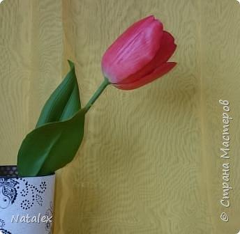 Добрый день всем жителям и гостям Страны! Хочу выразить свою благодарность Антонине Мельниченко за ее прекрасный вебинар по лепке тюльпана. И соответственно показать как я усвоила урок. фото 1