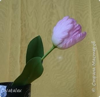 Добрый день всем жителям и гостям Страны! Хочу выразить свою благодарность Антонине Мельниченко за ее прекрасный вебинар по лепке тюльпана. И соответственно показать как я усвоила урок. фото 7