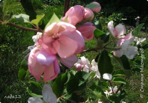 как говорят найдите отличие-розовая моя новая заколка.По моему похожа с настоящими цветами яблоньки. фото 1