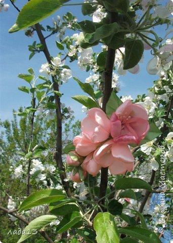 как говорят найдите отличие-розовая моя новая заколка.По моему похожа с настоящими цветами яблоньки. фото 6