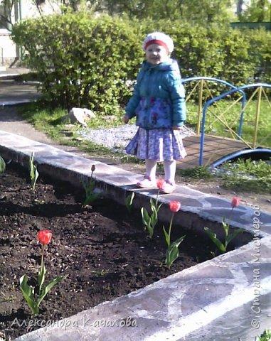 Тюльпаны на клумбе детского сада. Не смогла пройти мимо, да и дочки не дали. Фото сделаны на телефон, качество подводит.Простите. Фото сделаные вчера, 4 мая. фото 4
