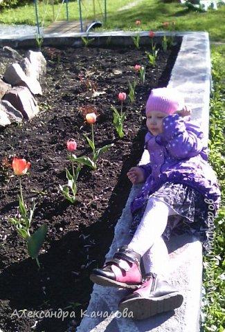 Тюльпаны на клумбе детского сада. Не смогла пройти мимо, да и дочки не дали. Фото сделаны на телефон, качество подводит.Простите. Фото сделаные вчера, 4 мая. фото 5