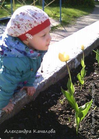 Тюльпаны на клумбе детского сада. Не смогла пройти мимо, да и дочки не дали. Фото сделаны на телефон, качество подводит.Простите. Фото сделаные вчера, 4 мая. фото 2
