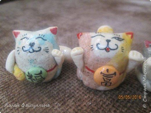 котики удачи. фото 4