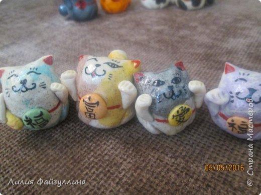 котики удачи. фото 15