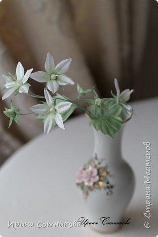 В перерывах между букетами я просматриваю цветы по инету, тут мой взгляд привлекло фото с этим красивым цветком. Очень захотелось его сделать. Сделала на одном дыхании… хотя сейчас я бы немного его переделала, изменила.  В народе кампанулу с белыми цветками ласково называют «невестой», а с голубыми — «женихом» или падающие звезды. Правильное название этого комнатного растения —кампанула равнолистная (Campanula isophylla).Она ассоциируется со свадьбой, весельем и радостью. Растение просто наполняет атмосферу дома легкой энергией. Что может быть очаровательнее комнатного цветка с красивым названием «жених и невеста»? Считается, что лучшим подарком для молодоженов, является цветок «жених и невеста», он способен помочь в создании крепкой семьи и наполнении совместной жизни безоблачным счастьем.Возможно, это всего лишь предрассудки, однако почему бы не поверить в уникальные возможности природного очарования, если оно способно приносить добро. фото 2