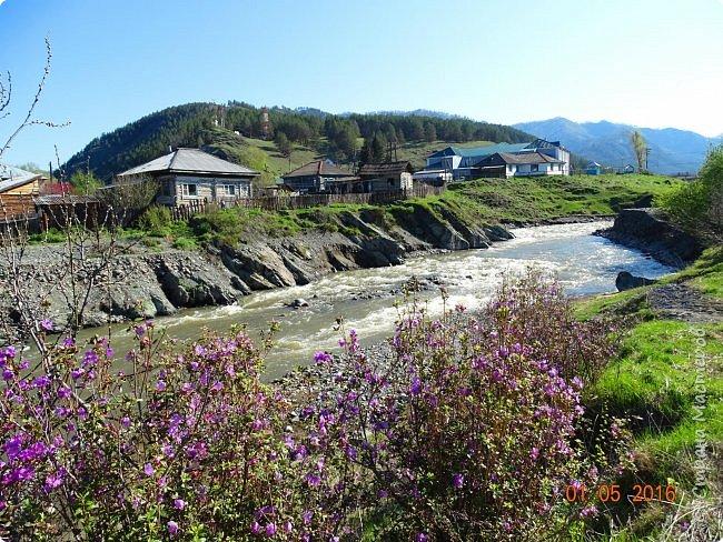 Добрый день всем! Сегодня мы отправимся на новую экскурсию по Горному Алтаю. фото 49